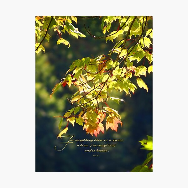 For everything there is a season, Ecc. 3:1 Photographic Print