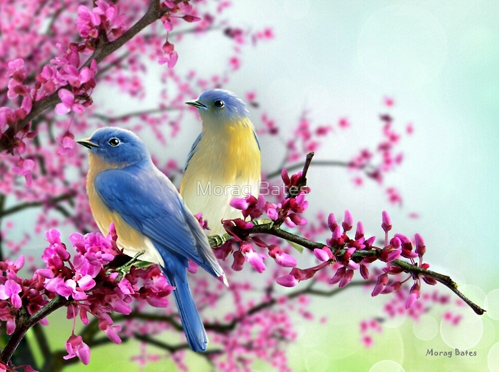 Sweet Bluebirds by Morag Bates