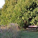 Evergreen Bench by Ben Waggoner