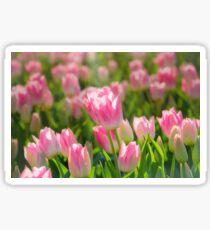 Sea of Sunlit Pink Tulips Sticker