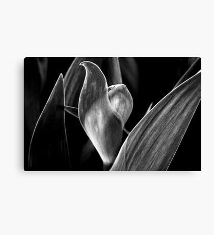 Bud With Leaf Formation Canvas Print