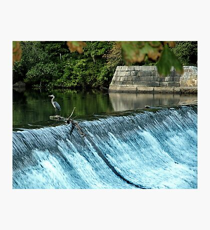 Heron - Looking towards the Future Photographic Print