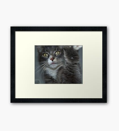 Let's Shake Framed Print