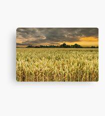Wheat field in sunrise Canvas Print