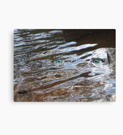 Eyes of the Storm Canvas Print