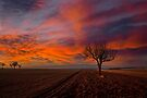 Burning sky in Autumn by Delfino