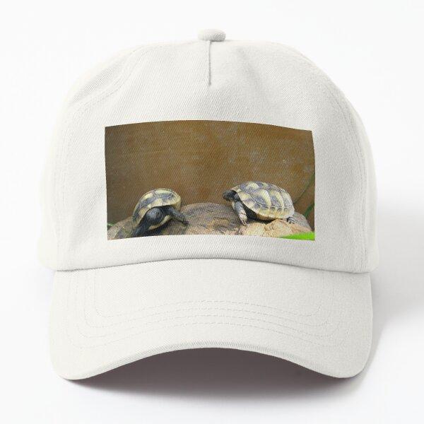 Eastern Hermann's Tortoise Babies (Testudo hermanni boettgeri) Dad Hat