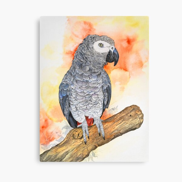 African gray parrot '' Poppy '' Canvas Print