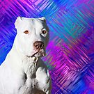 White American Pit Bull Terrier Dog by Beverly Lussier