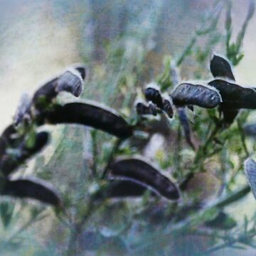 dreamy seedpods by DlmtleArt