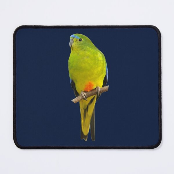 Orange-bellied Parrot 2 Mouse Pad