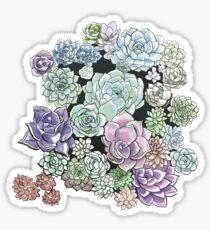 Succulent Sketches Sticker