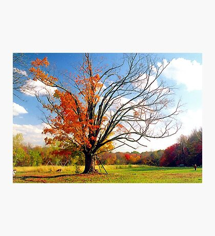 The Gina Tree Photographic Print