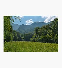 Deciduous forest in the summer Photographic Print