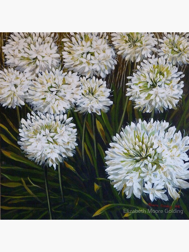 White Agapanthus Greeting Card By Emgolding Redbubble