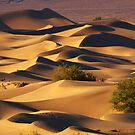 Sand Dunes by Alla Gill