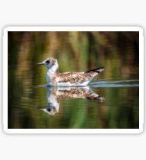 Juvenile seagull on water Sticker