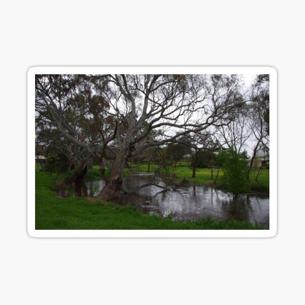 Naracoorte Creek Walk Sticker