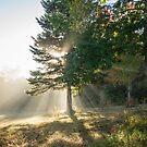 Sun Rays by Alana Ranney
