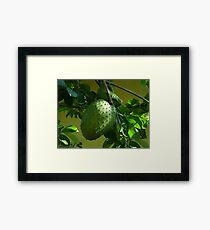 GUYABANO, THE SOURSOP FRUIT - Cancer Remedy- PICTURE/CARD Framed Print