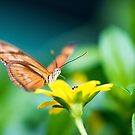 Butterfly by jamesataylor