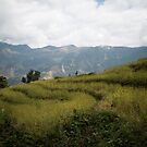 Millet terraces in Gorkha district by Clara Go (missatgerebut)