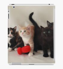 fluffy kittens iPad Case/Skin