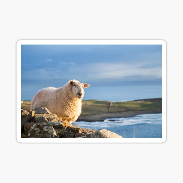 Donegal Sheep Sticker
