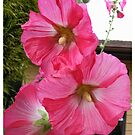 PINK HOLLYHOCK FLOWER BLOSSOMS by Nicola Furlong