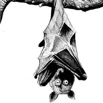 Freaked Out Fruit Bat by Tyler-Blake