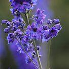 Miracle flower of the spring . Dr.Andrzej Goszcz by © Andrzej Goszcz,M.D. Ph.D