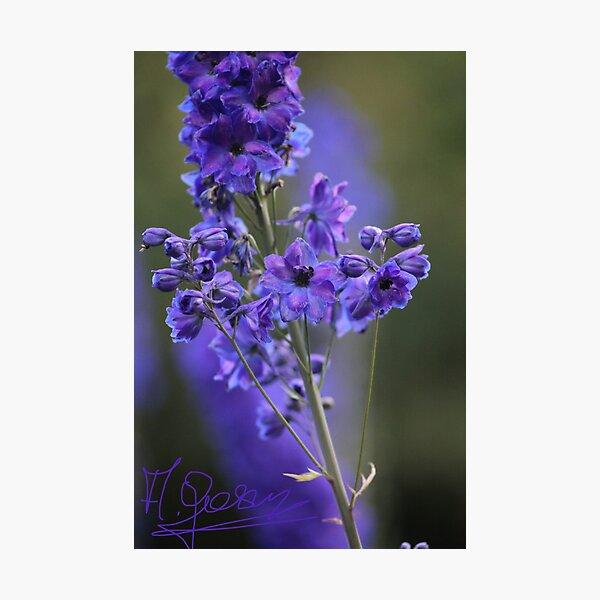 Wunderblume des Frühlinges. Dr. Andrzej Goszcz Fotodruck