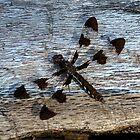 Dragonfly on Dead Log by Ben Waggoner