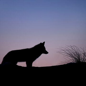Foxy Silhouette by clevelandcity