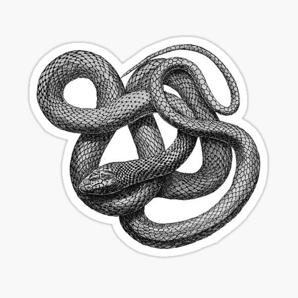 Large Snake Sticker