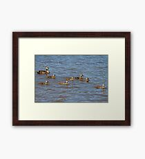 Junior leading the way  Framed Print
