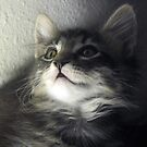 Kitten Mikino by Jaeda DeWalt