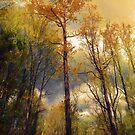 Morning Glow by John Rivera