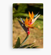 Birds of Paradise/Heliconia - Nature Photography Canvas Print