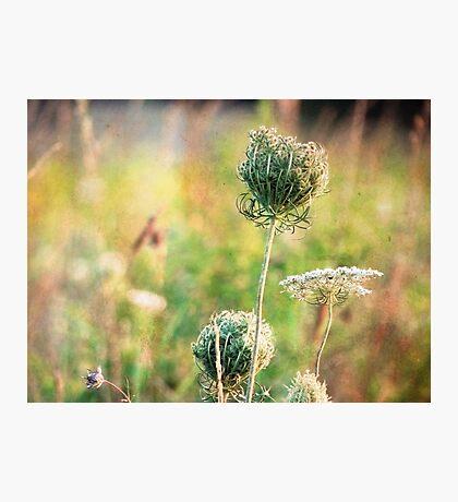 wild grasses 20 Photographic Print