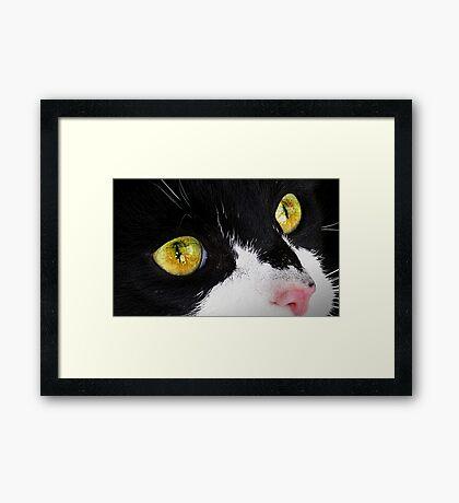 Eye Catcher Framed Print