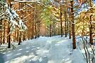 Winter trail - painted by PhotosByHealy
