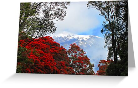 Red Blossoms and glaciers by Pete Staples