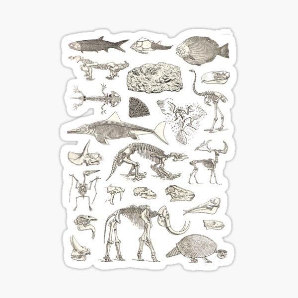 Paleontology Illustration Sticker