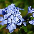 Blue Bouquet With Morning Dew by Noble Upchurch