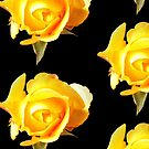 Yellow Rose  by Toradellin