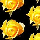 Yellow Rose  by Toradellin