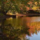 Fall In New Brunswick by Martha Medford