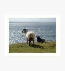 Sheep at Arranmore, Donegal Art Print