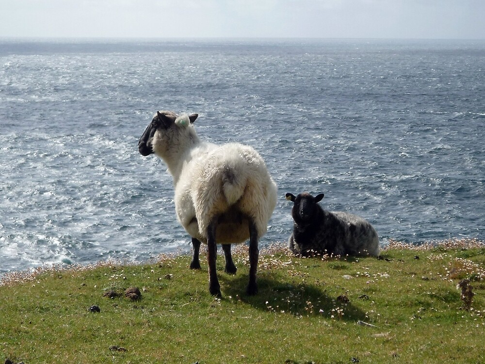Sheep at Arranmore, Donegal by Esther  Moliné
